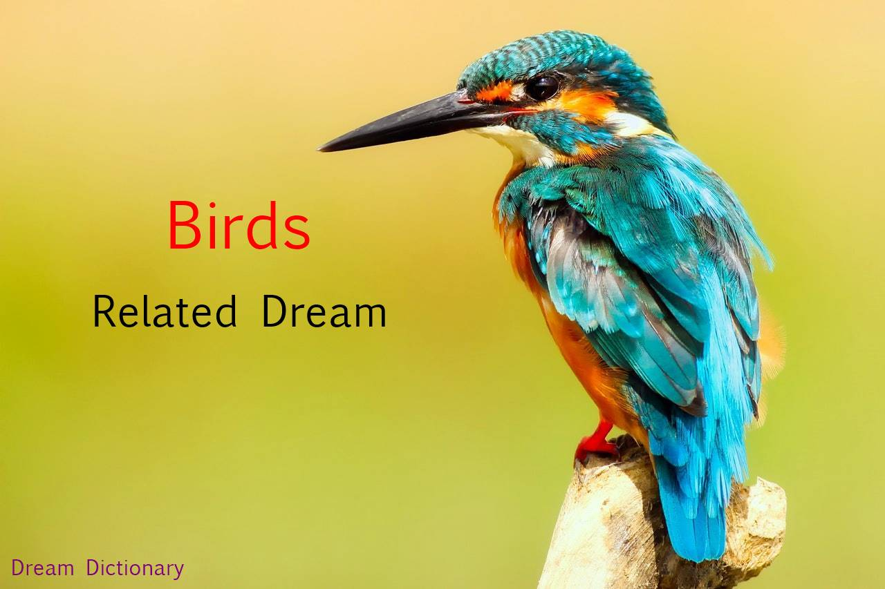 Bird Dream meaning, pakshi se jude sapne gvat gyan