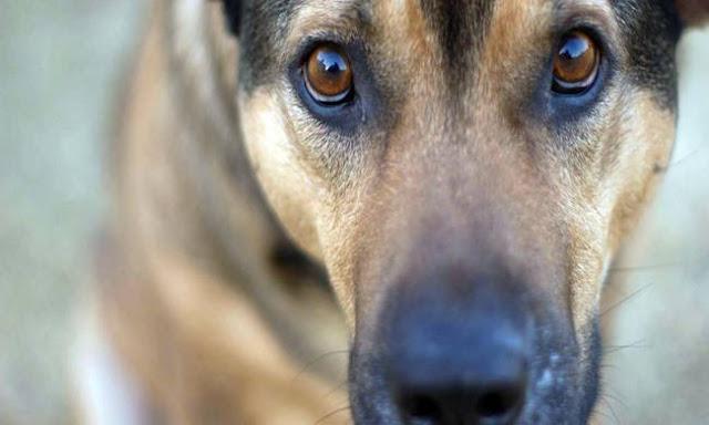 Αποψίλωση και αποπαρασίτωση σε αδέσποτα σκυλιά πραγματοποίησε ο Δήμος Άργους Μυκηνών