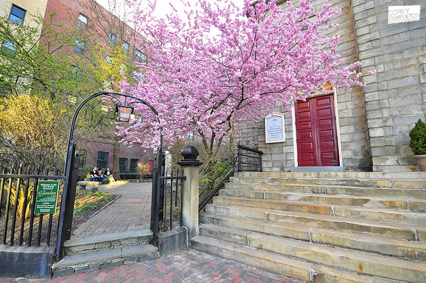 Portland, Maine USA Photo by Corey Templeton. A springtime Thursday Throwback to April 13, 2012 and the and cherry blossoms in front of the First Parish Church.