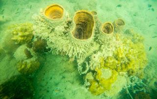 Fondos marinos en Phu Quoc