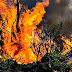 ¿Qué hay detrás de los incendios en el sur?