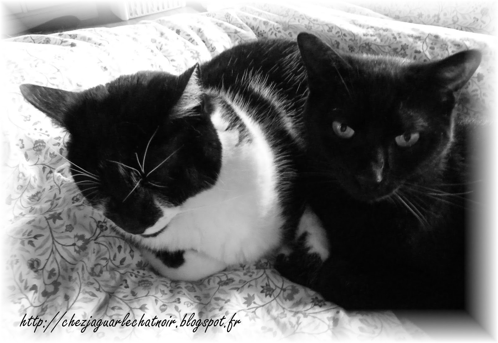 chez jaguar le chat noir c 39 est revenu comme c 39 tait parti. Black Bedroom Furniture Sets. Home Design Ideas