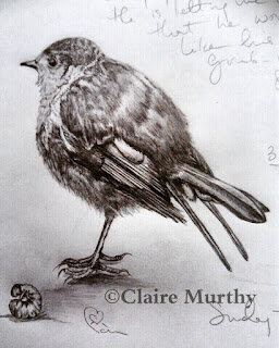 Drawing Workshops. Wildlife Art. Kent. Surrey. Sussex. London.