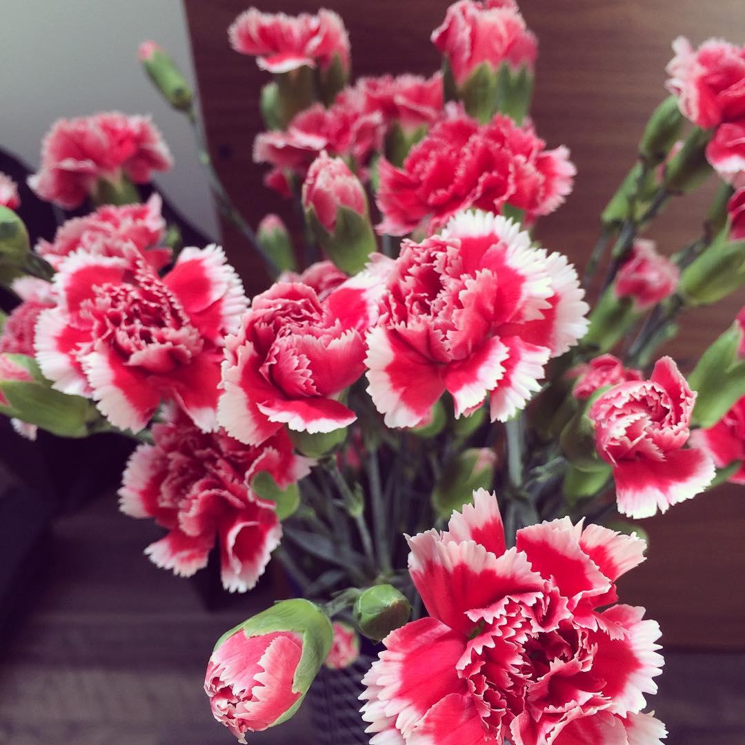 Hình Ảnh Hoa Cẩm Chướng Đẹp Tượng Trưng Cho Tình Bạn, Lòng Quí Mến