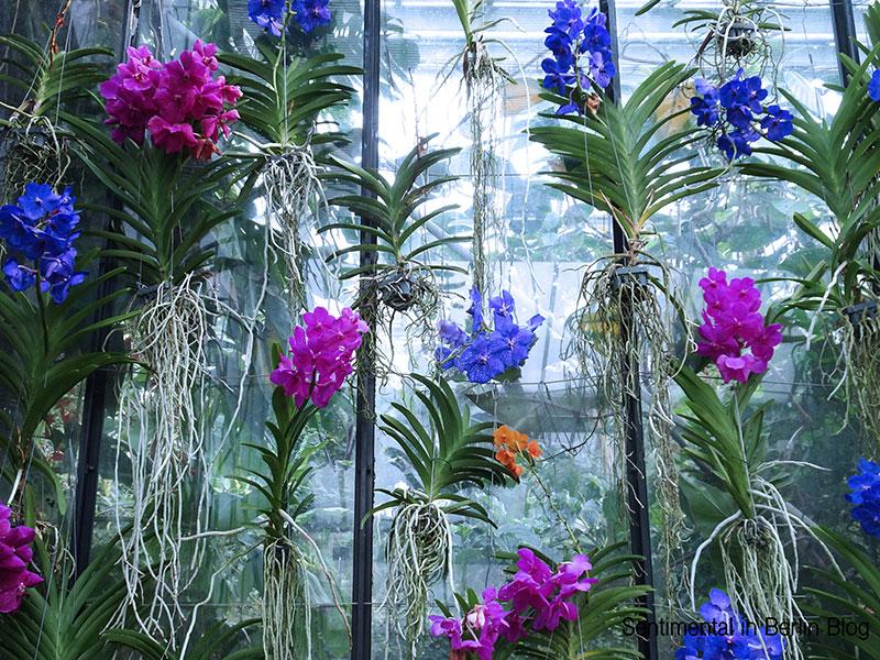Kew_Gardens_Orchid_Festival_2018_London