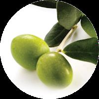 Buah Zaituin Bahan Herbal Alami TF Organik