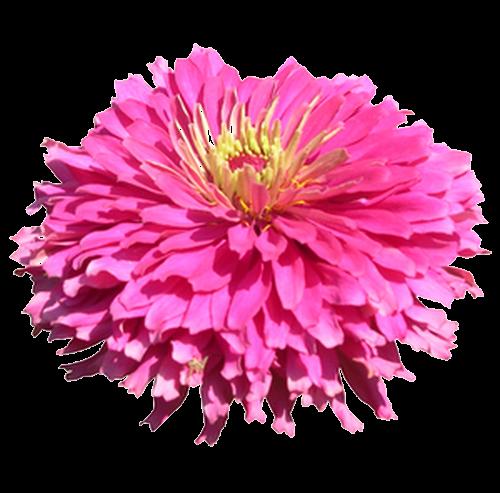 Aco transparence: Fleurs sur fond transparent