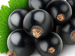 Blackcurrant fruit images wallpaper