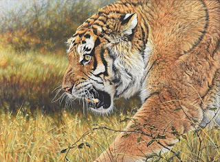 Big Cat Paintings by Alan M Hunt