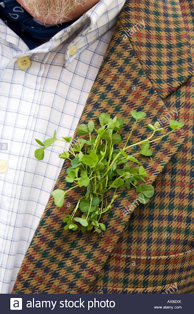 AlamyStock Photo is a shot of traditional Shamrocks worn on lapels on St. Paddy's Day
