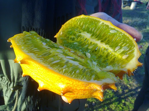African horned cucumber also is known as the African horned melon.