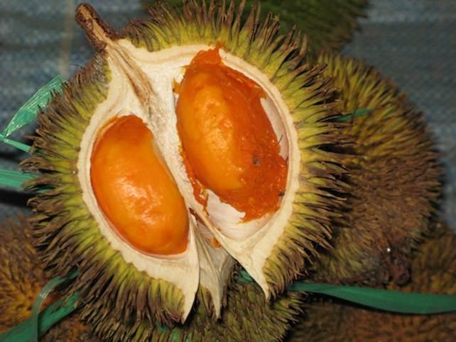 hal yang menyebabkan buah durian berbahaya di konsumsi