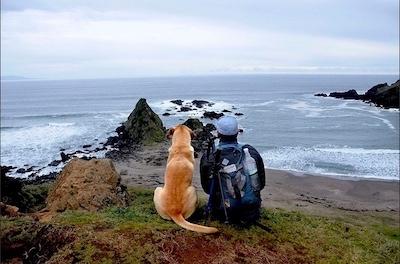 imagen de perro y joven mirando el mar
