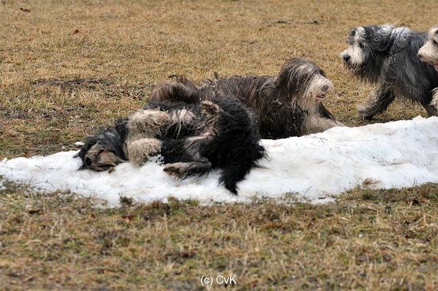 my collie-life: bilder von cfbrh hundewanderung