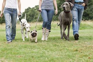 El entrenamiento de un perro puede hacerse con relativa facilidad, a pesar de lo que algunos creen