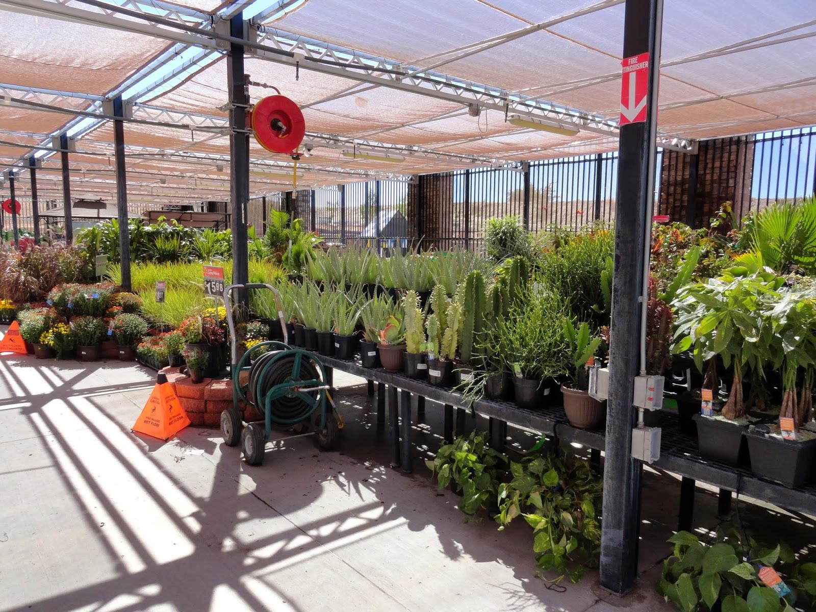 Garden Centre: Danger Garden: I Bought A Plant At Walmart, Do You Still