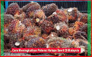 Cara Meningkatkan Potensi Kelapa Sawit Di Malaysia
