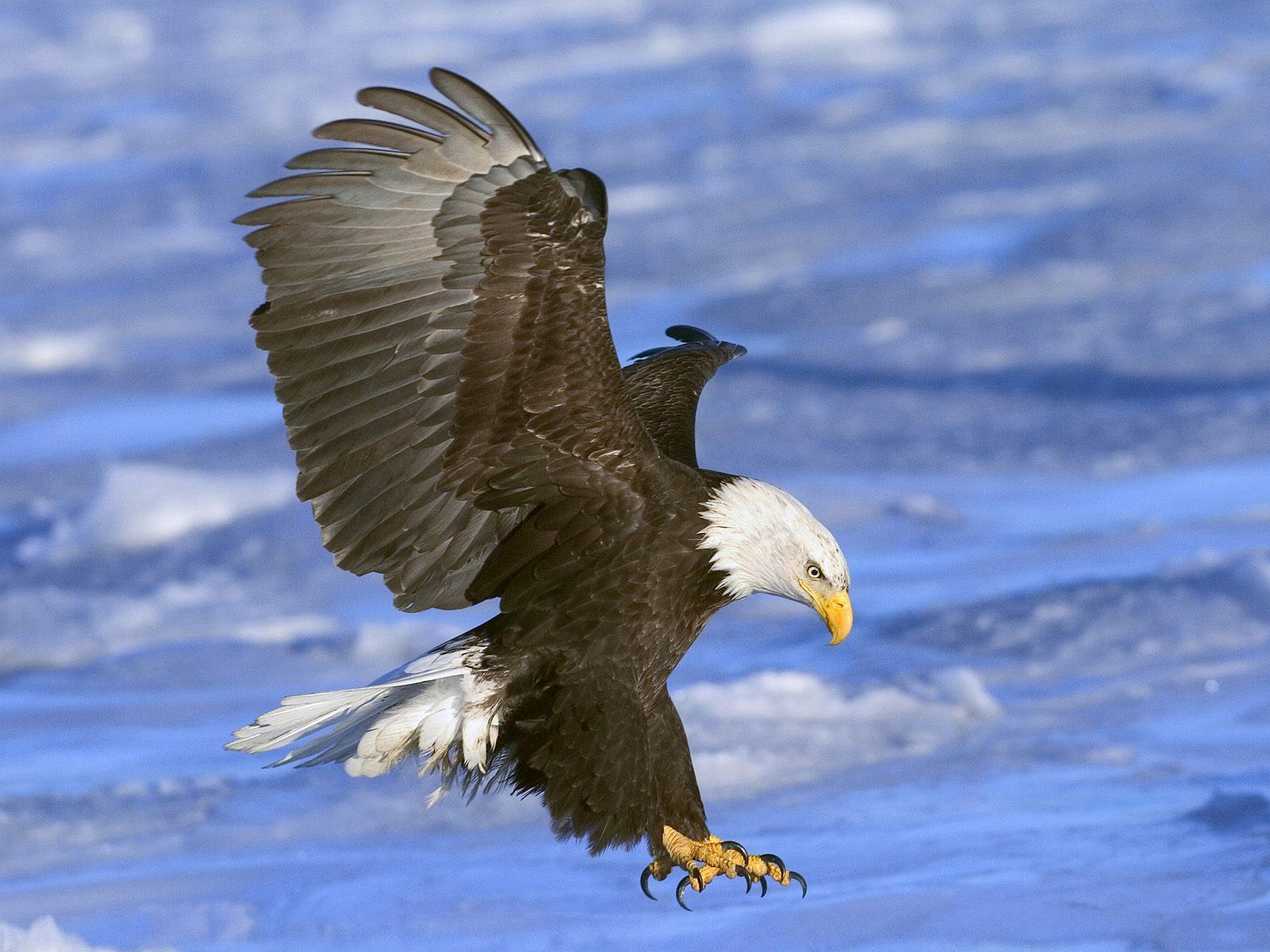 Hermosas Imágenes De Aves En Alta Definicion