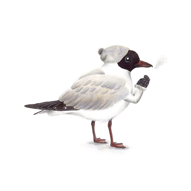 ilustración de pájaros, gaviota reidora, aves de la albufera, chroicocephalus ridibundus, ilustración de aves, aves acuáticas, aves mediterráneas, aves de la península ibérica, aves españolas, Inktober, Inktober 2017,