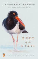 Review of Birds by the Shore: Observing the Natural Life of the Atlantic Coast by Jennifer Ackerman