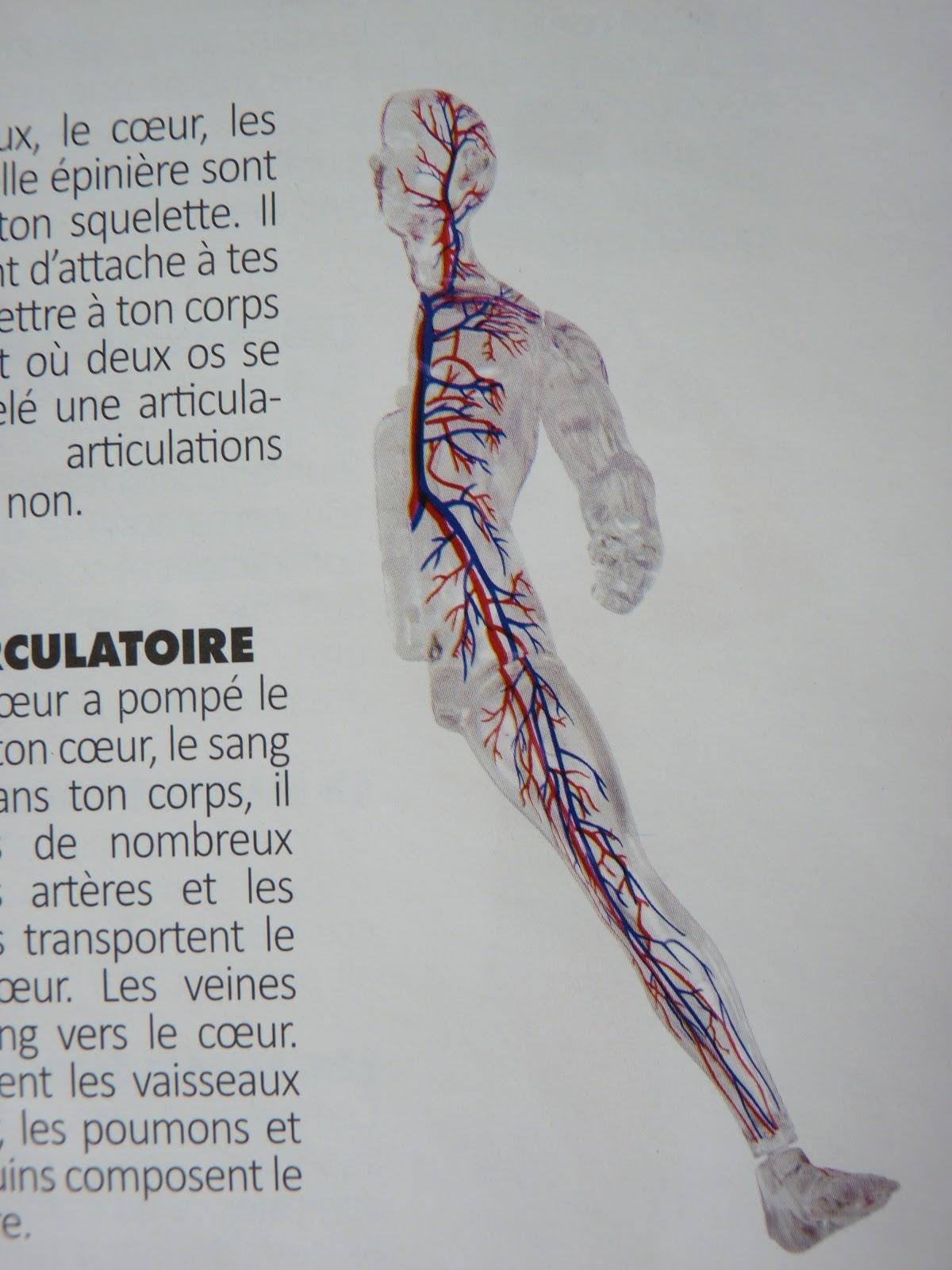 Nett Kostenlos Anatomie 3d Ideen - Anatomie Ideen - finotti.info