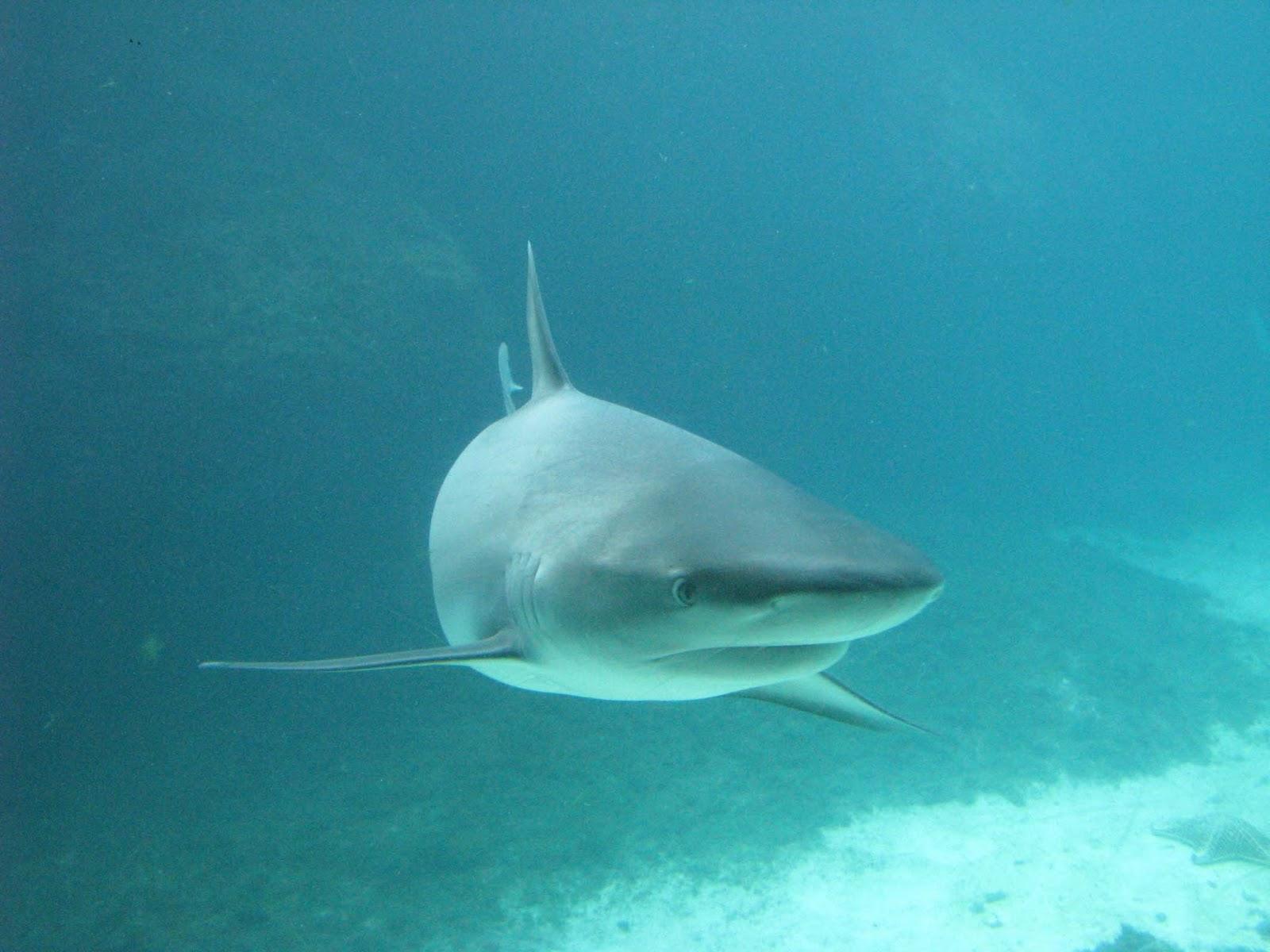 Dlaczego dobra agencja PR przypomina rekina