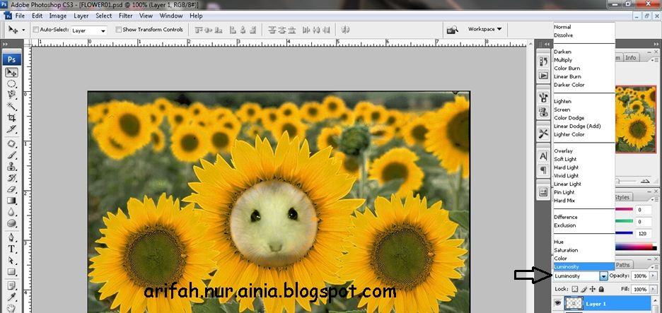 Tutorial Photoshop Memanipulasi Bunga Matahari Berwajah