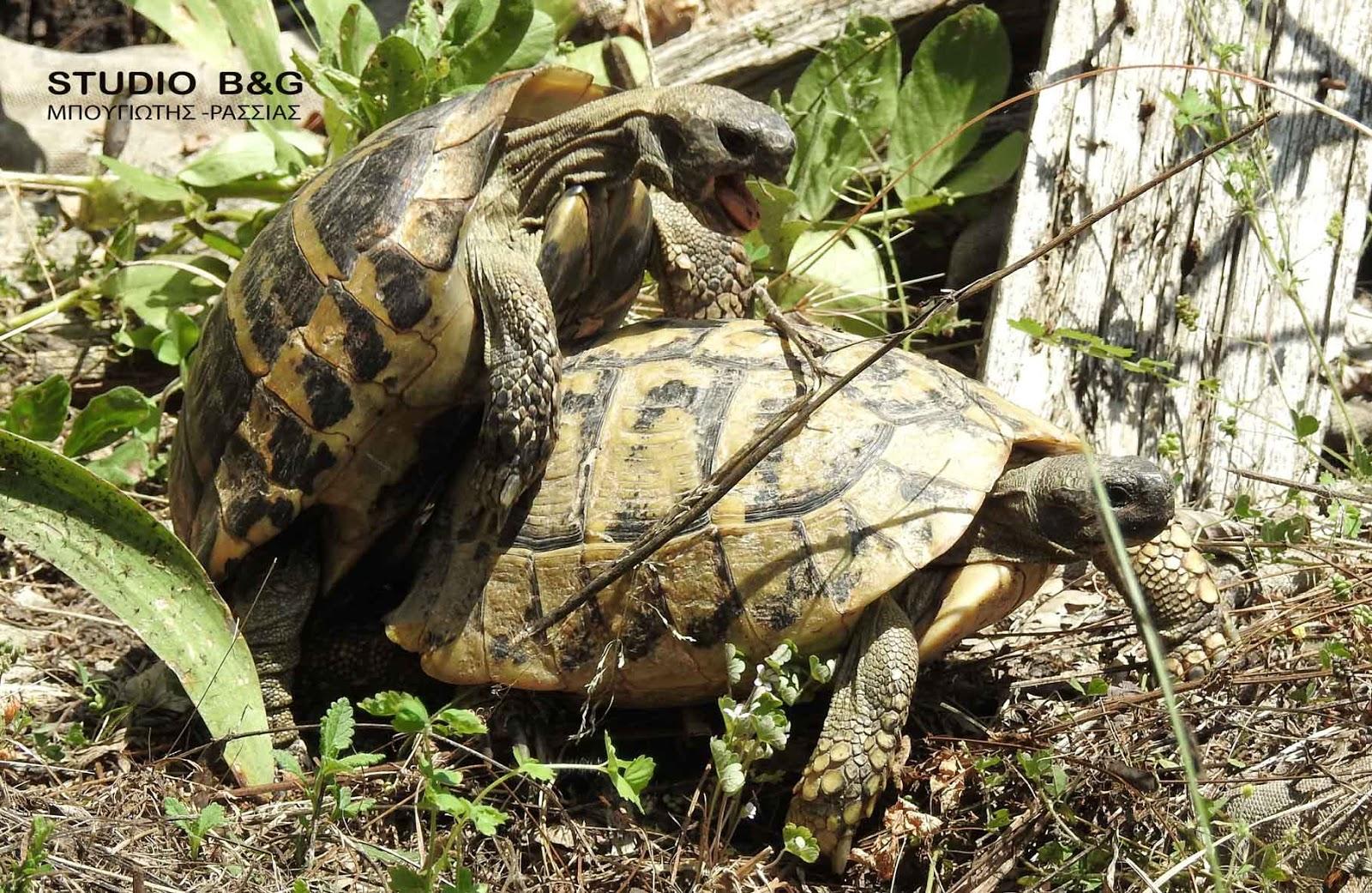χελώνα άνθρωπος που χρονολογείται αντιστοιχία με τις ταυτότητες