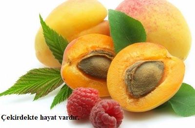 Meyve Çekirdeklerine Dikkat