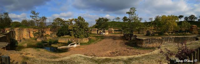 Enclos Safari, Bioparc Doué-la-Fontaine