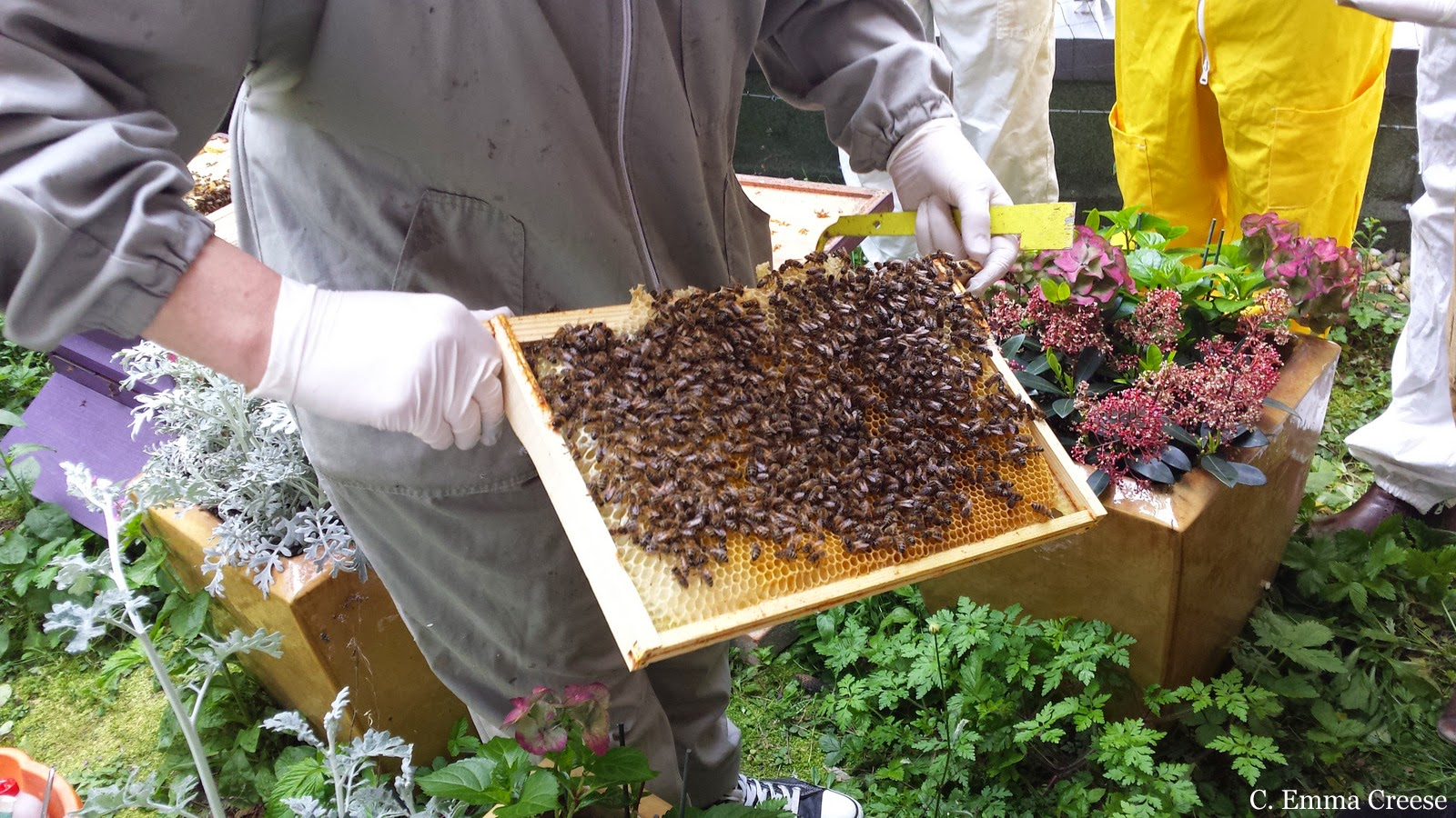 Beekeeping at St Ermin's Hotel Westminster