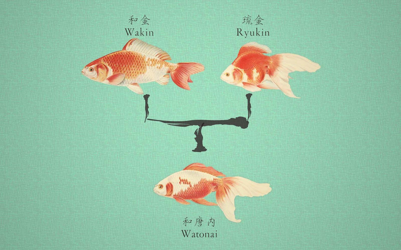 Watonai Goldfish