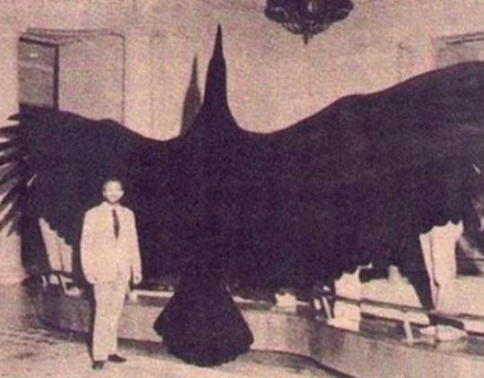Argentavis - Burung yang memiliki ukuran terbesar yang Pernah Hidup di Bumi