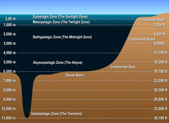 Switzerite  The Best Way To Make Ocean Zones In A Jar