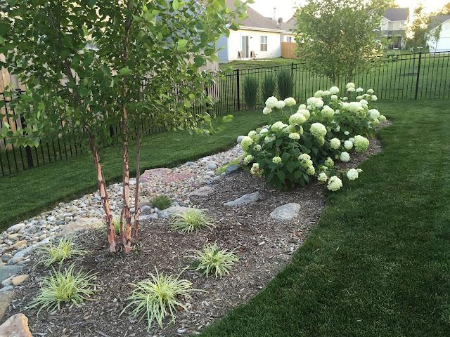 birch tree plant pairing