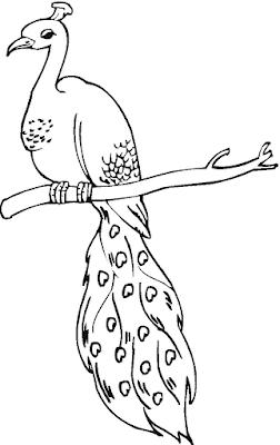 Gambar Mewarnai Burung Merak - 5