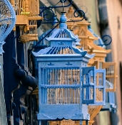 gejala cacingan pada burung ocehan