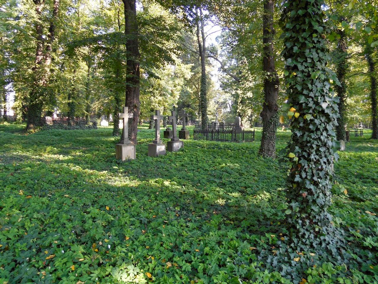 Nekropolię ewangelicką we Wschowie porasta bujna roślinność.