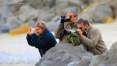 kuş gözlemcisi