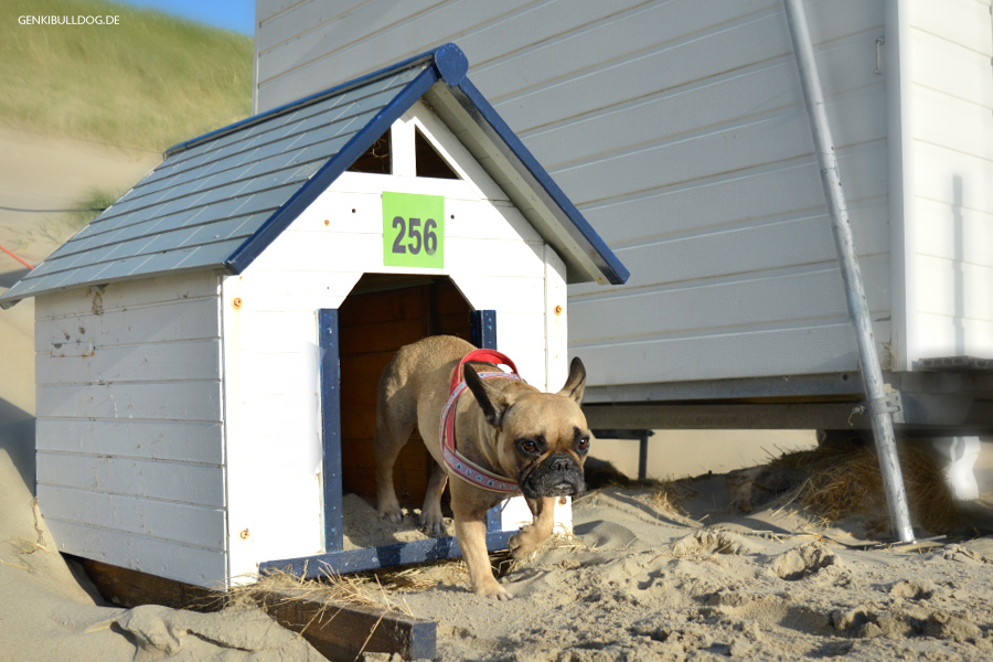 Texel Strandhaus Nr. 256 für Hunde