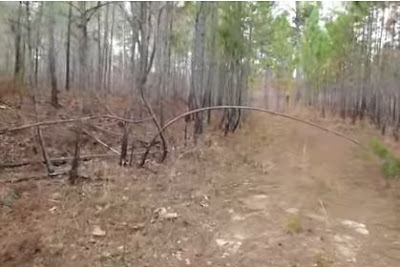 Alabama Bigfoot Tree Bend