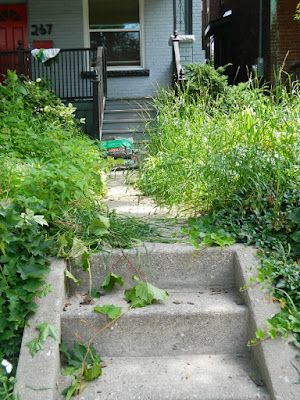 Little Italy Front Garden Clean up before by Paul Jung Gardening Services Toronto