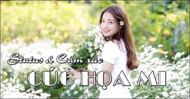 Những Status & Cảm xúc hay về Cúc Họa Mi, loài hoa sáng trong !!!