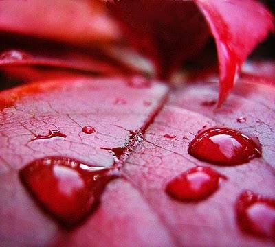 Gambar Hujan Darah