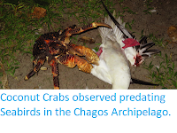 http://sciencythoughts.blogspot.co.uk/2017/11/coconut-crabs-observed-predating.html