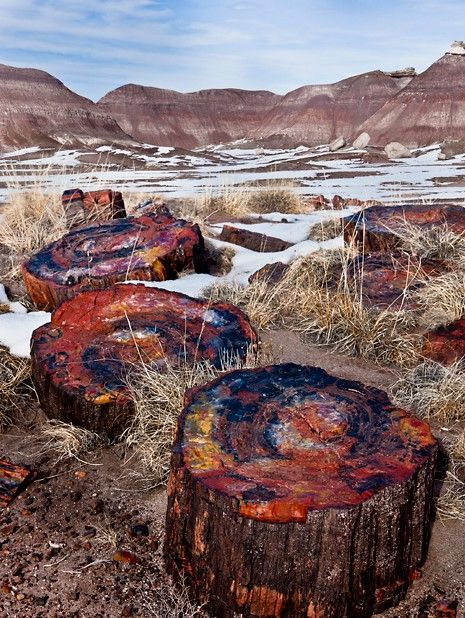 Mother Nature Rainbow Wood Of Petrified Forest National