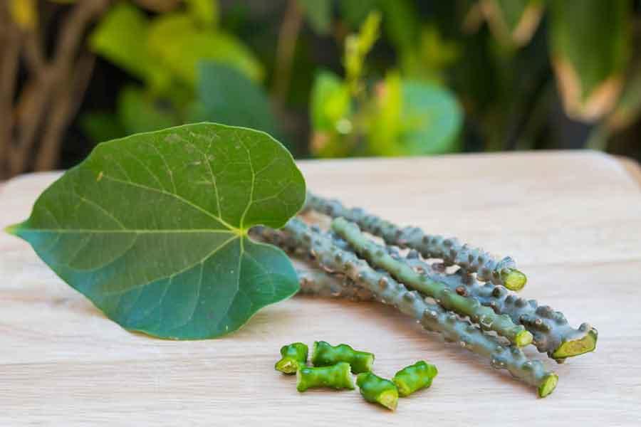 Pengobatan dengan tanaman brotowali