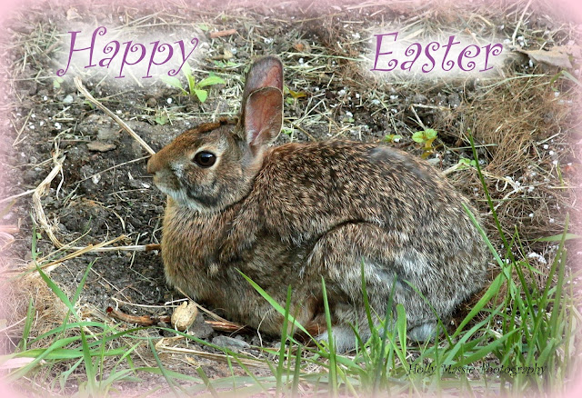 Happy Easter! Backyard Bunny, Holly Massie Photography, all rights reserved.
