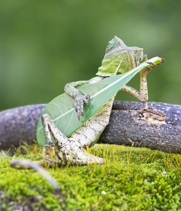 Rango plays guitar, funny image