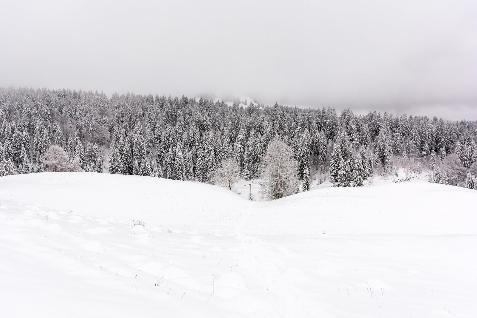 crêt, chalam, randonnée, raquettes, parc, jura, hiver, neige